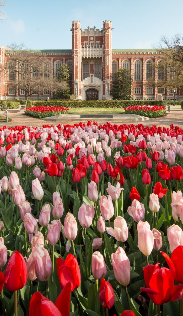 Bizzell library with tulips